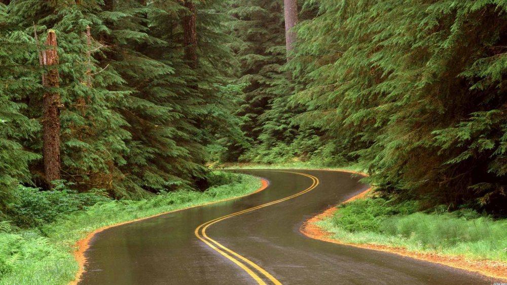 scenic-road-12