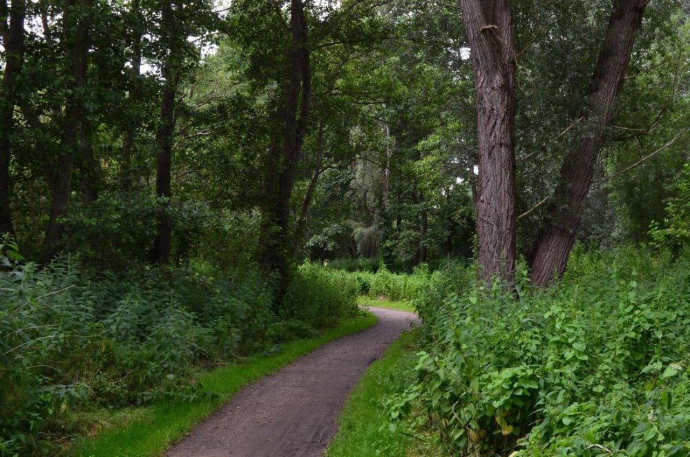 a_path_through_the_forrest____by_kodoschaf-d3lege3